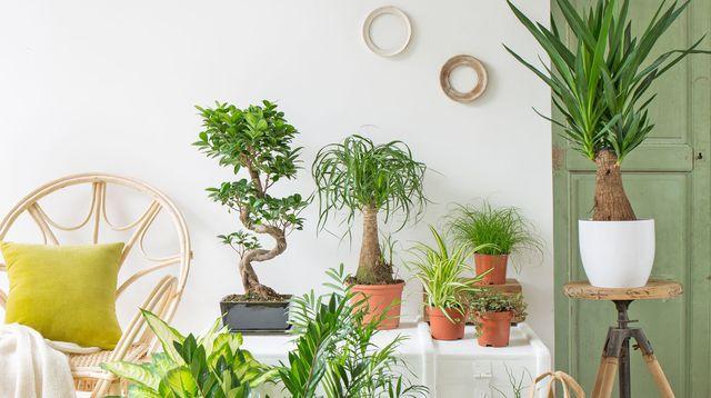 plante interieur appartement