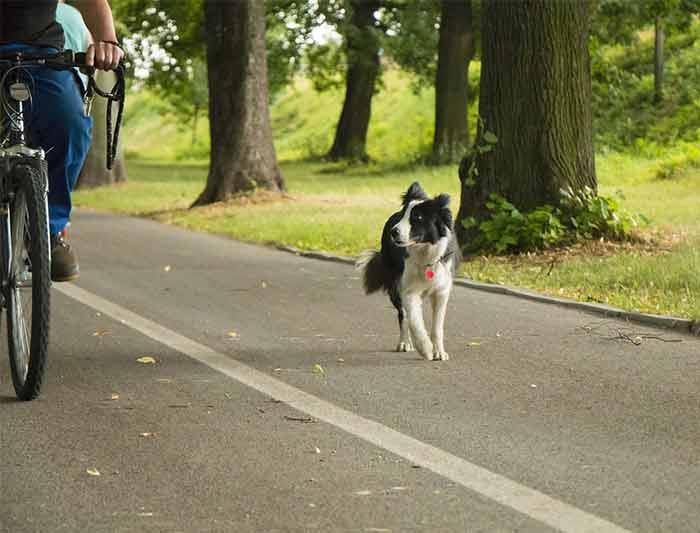 Comment éviter que mon chien court après les vélos
